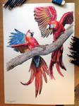 Aras Color pencil Drawing