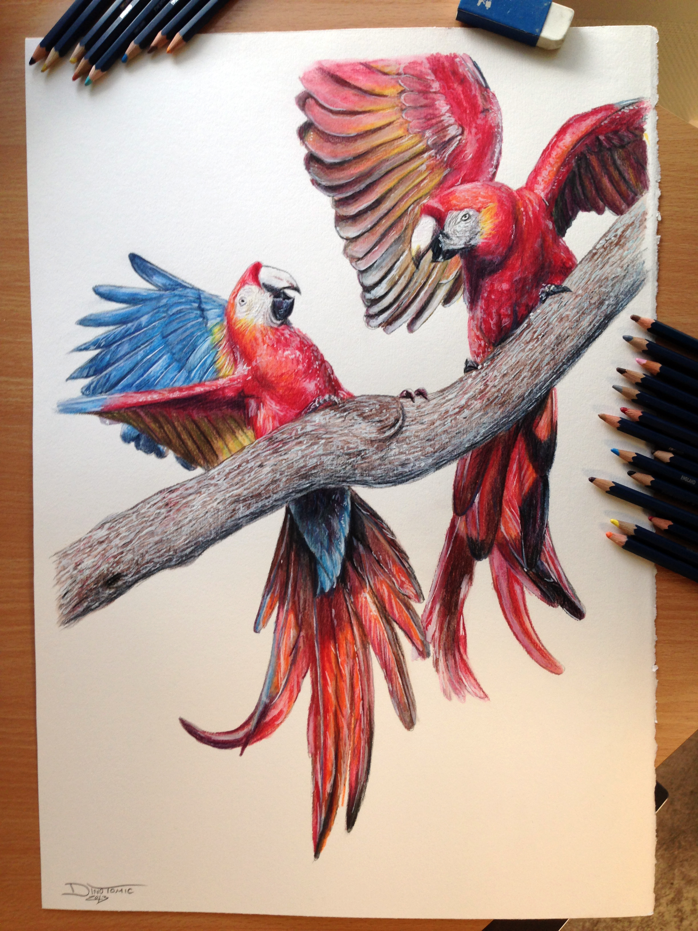 Aras Color Pencil Drawing By Atomiccircus On Deviantart Colour Drawing