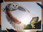Owl and Frog Color Pencil Drawing