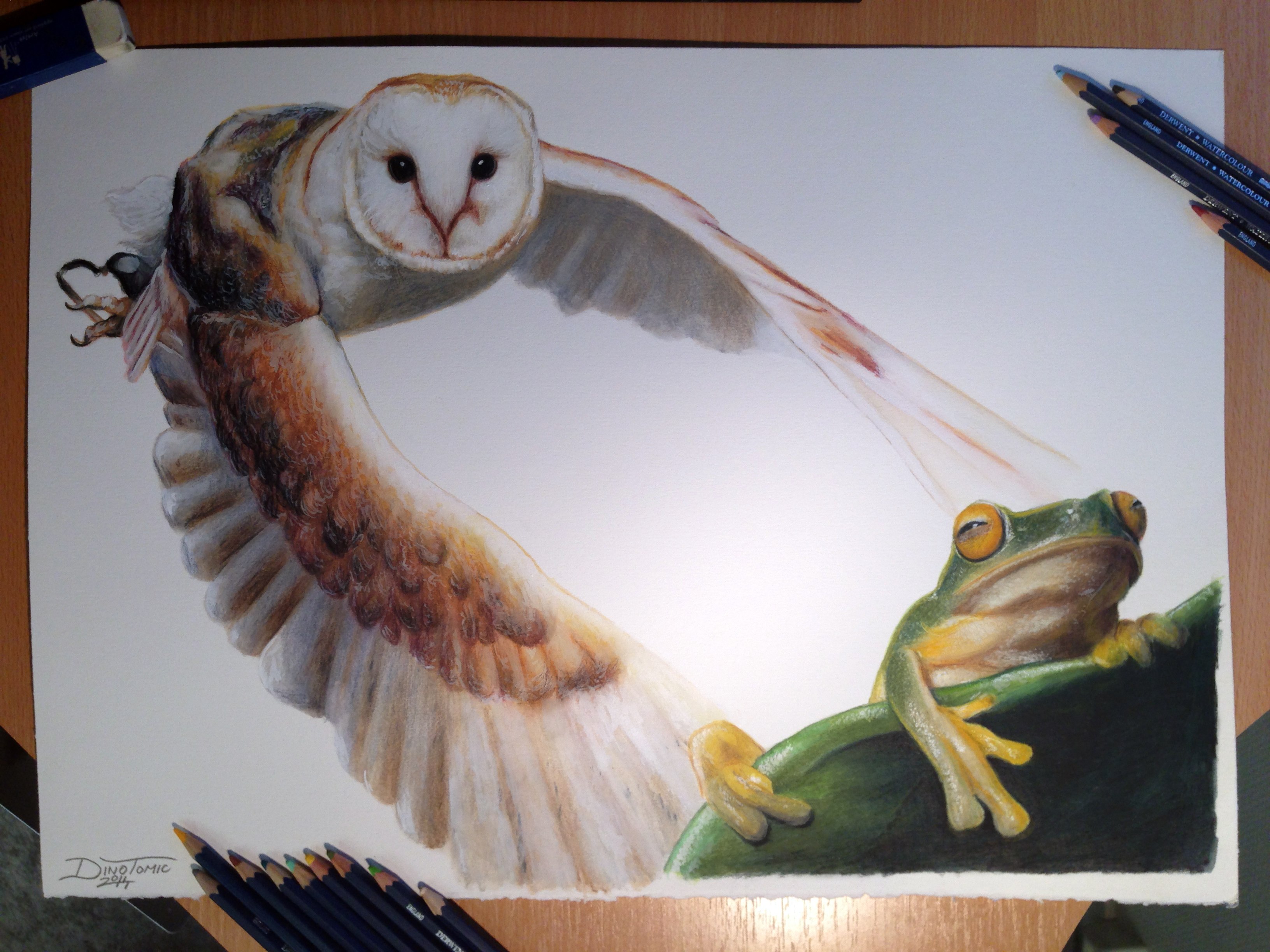 Disegni Rane Colorate: Owl And Frog Color Pencil Drawing By AtomiccircuS On