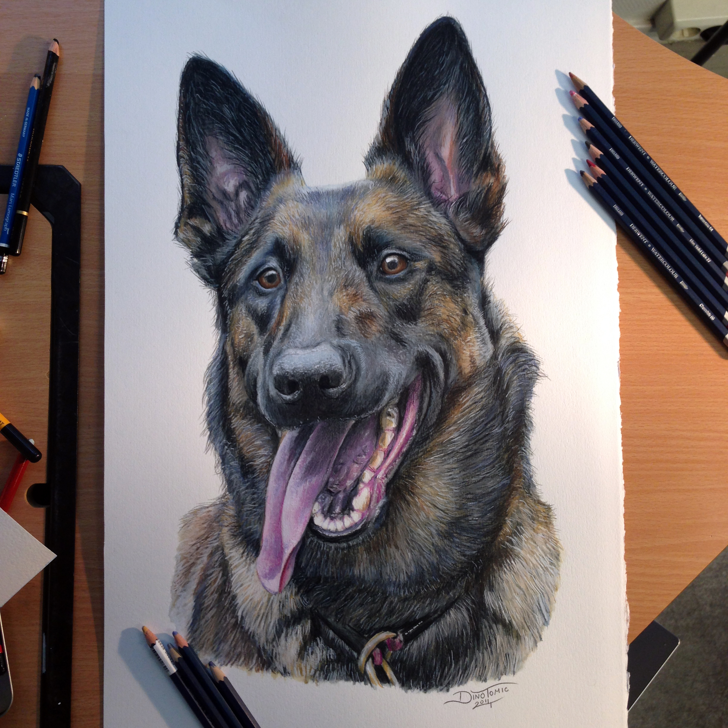 Belgian Malinois Color Pencil Drawing By Atomiccircus