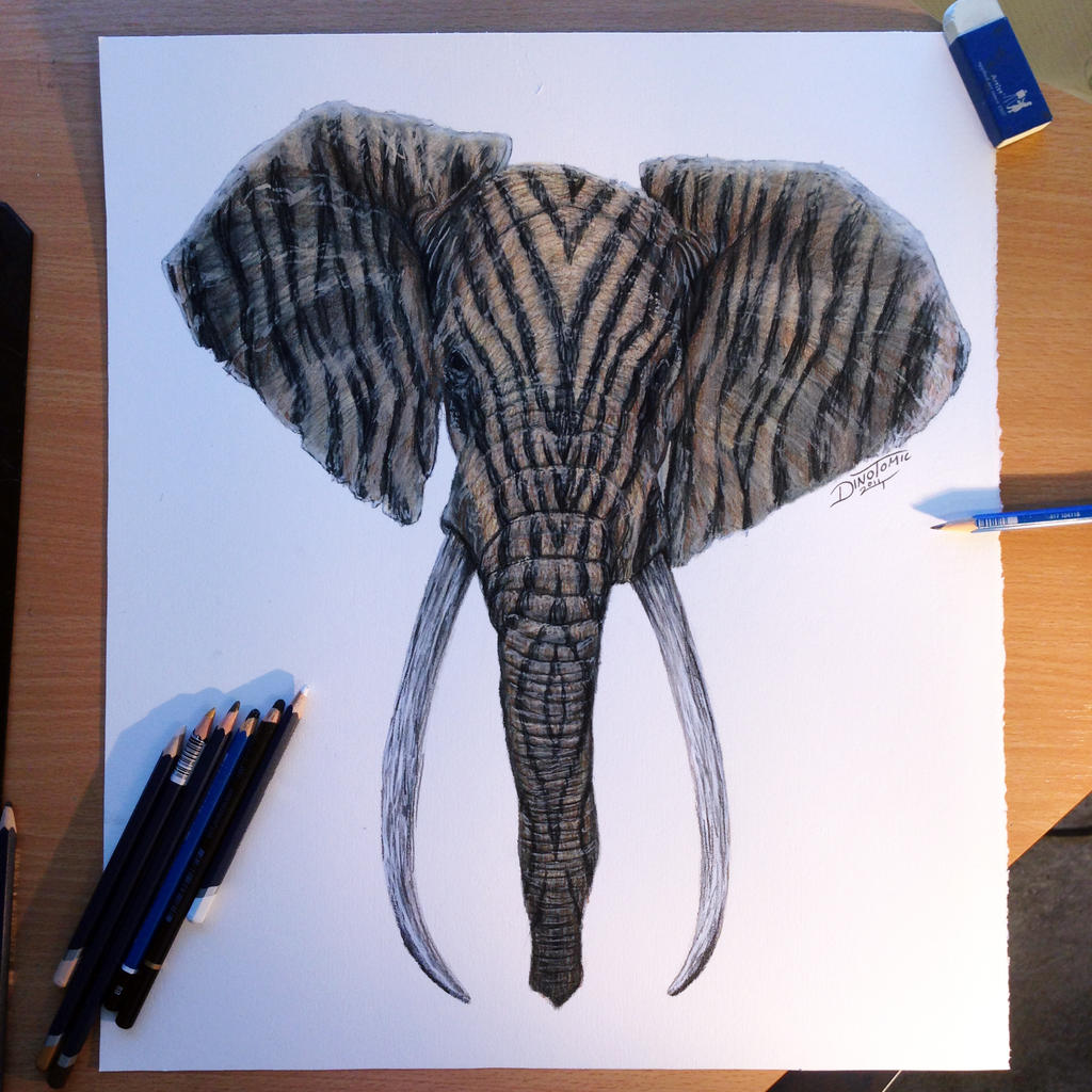 Elephant Drawing Color Color Pencil Drawing of an