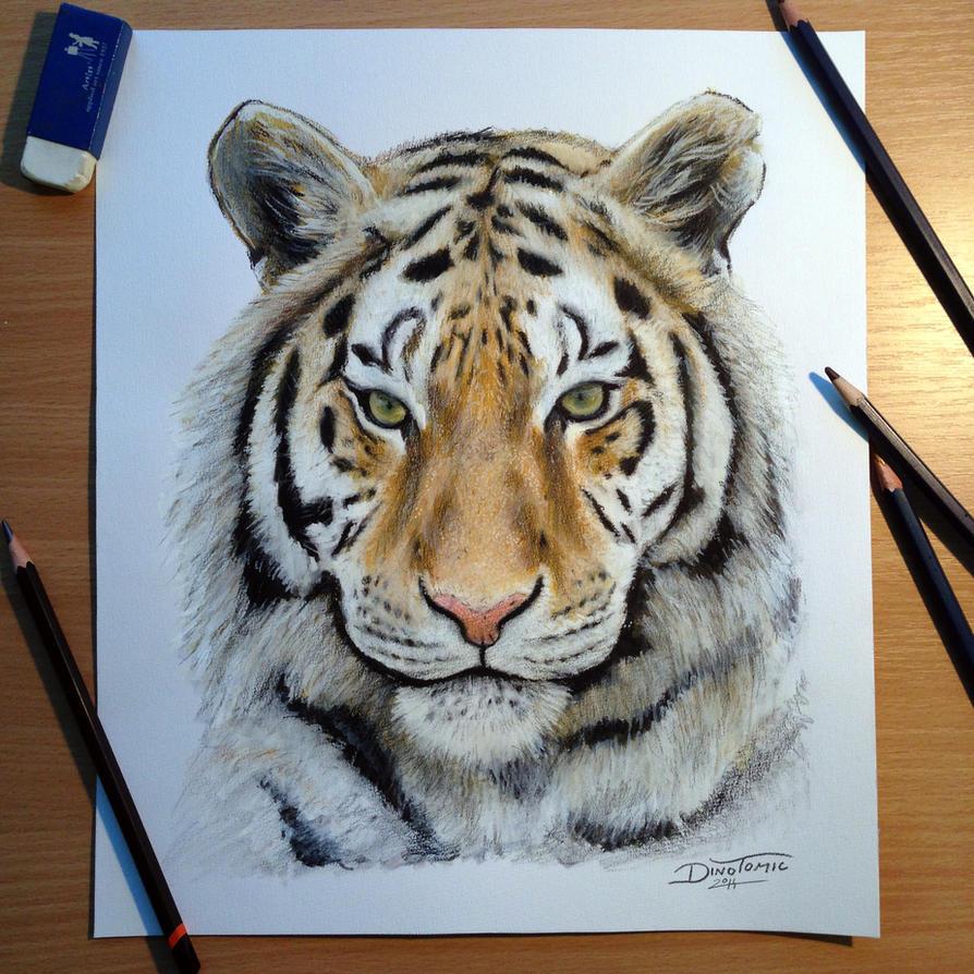 Drawings of Tigers Fac...