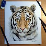 Tiger pencil drawing