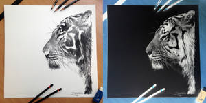 Inverted Tiger Pencil Drawing
