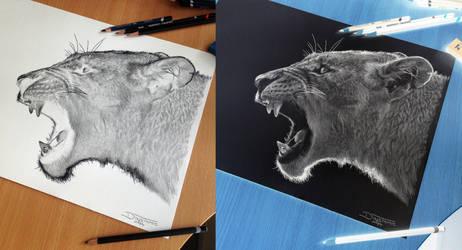 Puma Inverted Pencil Drawing