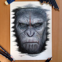 Caesar Color Pencil Drawing by AtomiccircuS