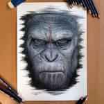 Caesar Color Pencil Drawing