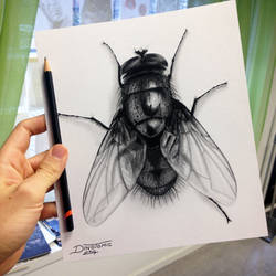 Quick Fly Drawing