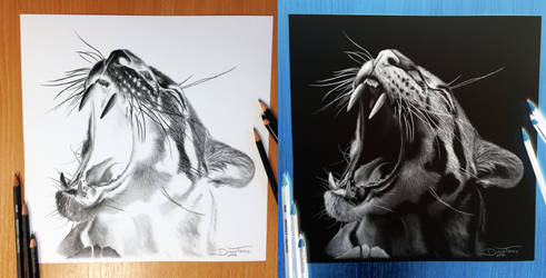 Clouded Leopard Inverted Pencil Drawing