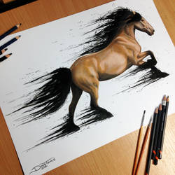 Horse Color Pencil Drawing by AtomiccircuS