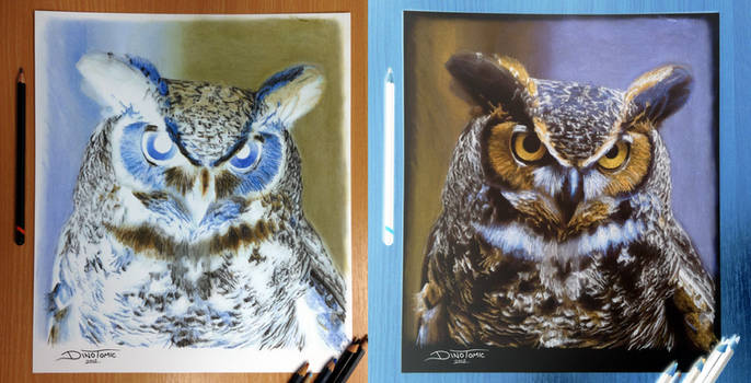 Owl Inverted Color Pencil Drawing