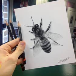 Quick Bee Sketch
