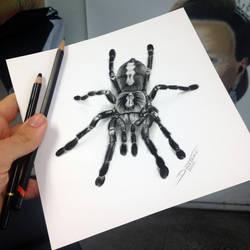Quick Tarantula sketch by AtomiccircuS