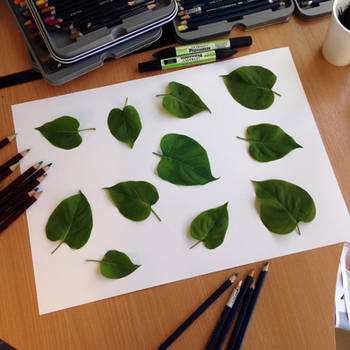 Real Leaf illusion drawing