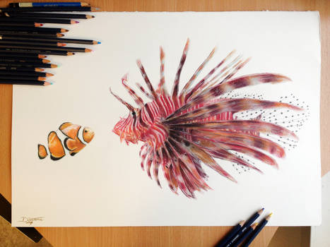 Fish Friends Pencil Drawing