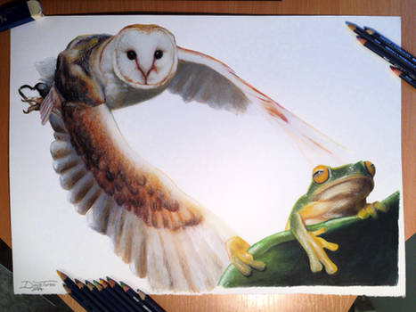 Owl/ Frog Color Pencil Drawing
