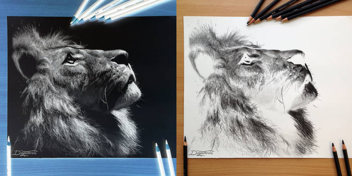 Inverted lion Pencil Drawing