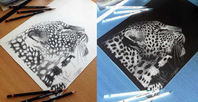 Inverted Leopard Pencil Drawing