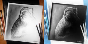 Monkey Inverted Drawing