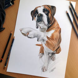 Dog Color Pencil Drawing