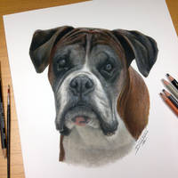 Dog Pencil Portrait by AtomiccircuS