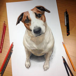 Dog Drawing by AtomiccircuS
