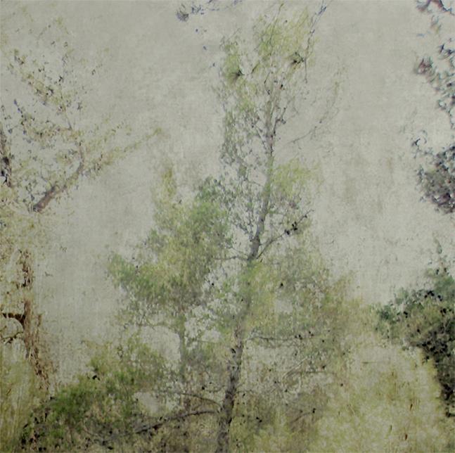 Pines by iram