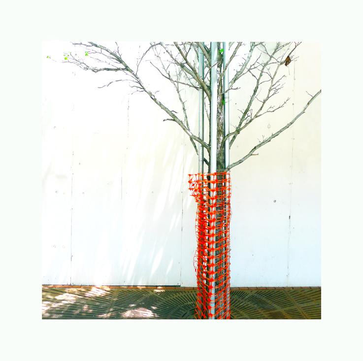 tree in construction by iram