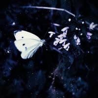 moonfly by AndreeaIuliana