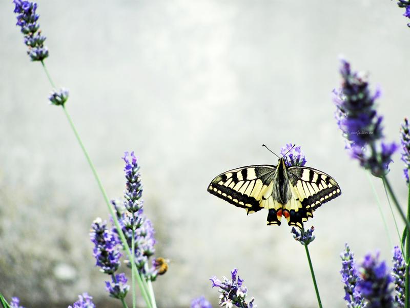 aveva una farfalla, dentro. by awfultosee