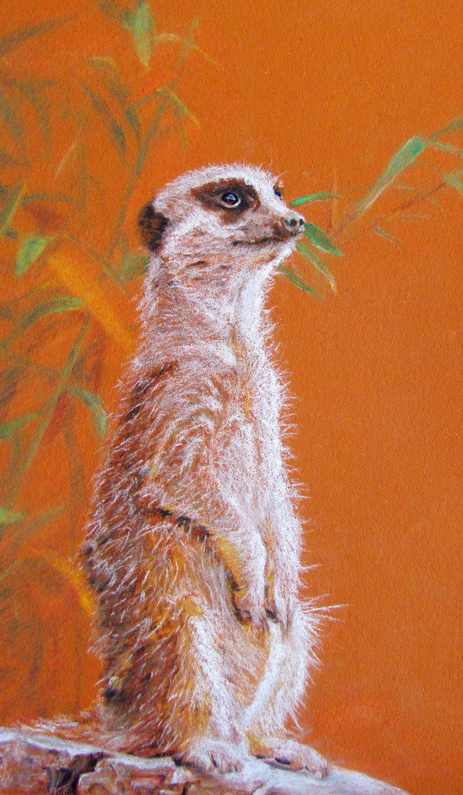 Ciara's Meerkat by SandieBlair