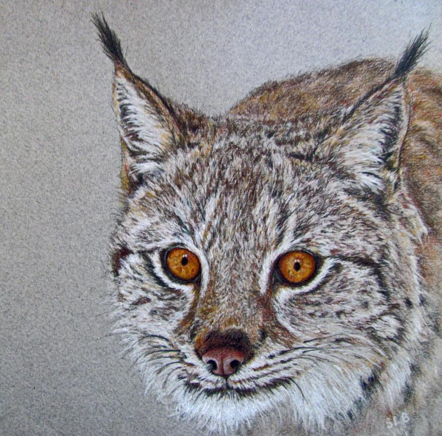 Pali's Lynx by SandieBlair