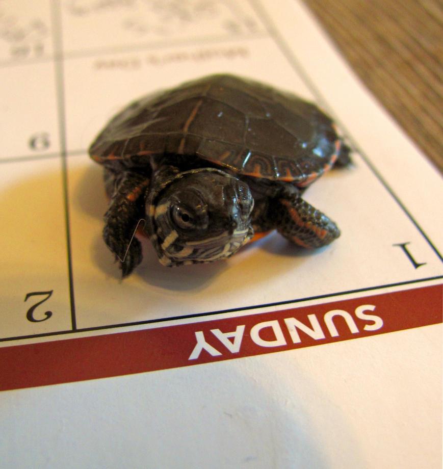 Turtle Sunday by SandieBlair