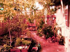My Garden In Oroville