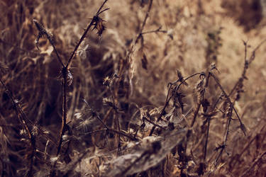 Sharp Prickly Dead Things by SkylerBrown