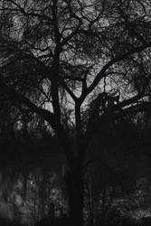 Bleak and White by SkylerBrown