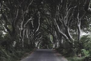 The Dark Hedges by SkylerBrown