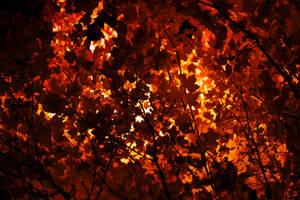 Fall by SkylerBrown