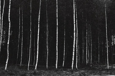 Birch by SkylerBrown