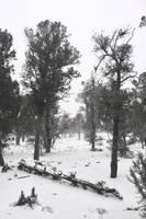 Arizona Snowscape by SkylerBrown