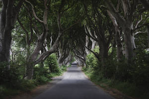 Dark Hedges 2018 by SkylerBrown