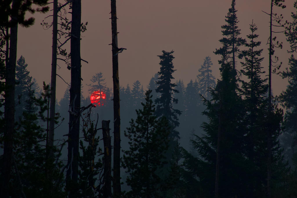 Red Sun by SkylerBrown