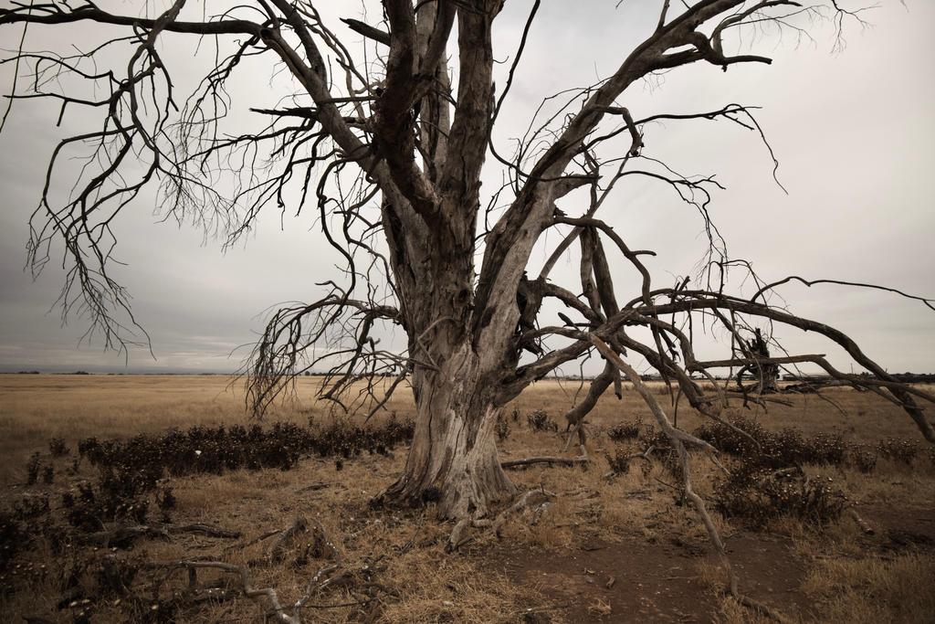 Deadtree 2018 by SkylerBrown