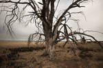 Deadtree 2018 by SkylerBrown