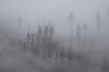 Olympic Fog by SkylerBrown