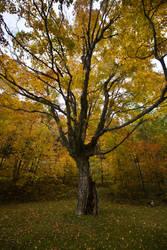 Cascade Lakes Tree