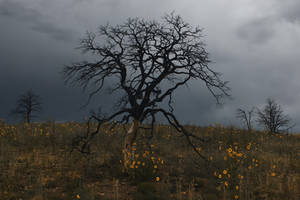 Stormtree