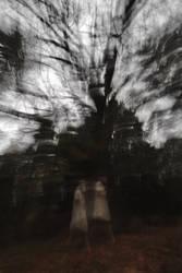 Woodland Blur