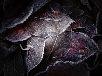 frosty leaves by EdinaBaltas